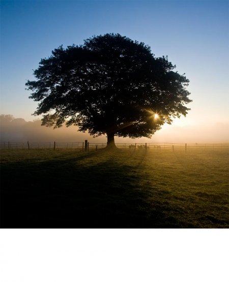 Autumn Dawn- Skutterskelfe Park, North Yorkshire