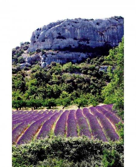 Lavender Field, Gorge de Verdon