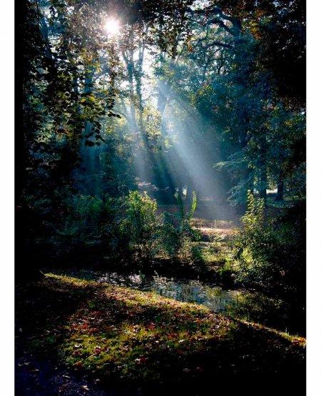 Thorpe Perrow Arboretum, early morning sunshine