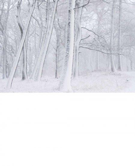 Newton Woods, winter