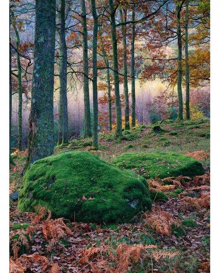 Autumn woodland, Borrowdale, Lake District