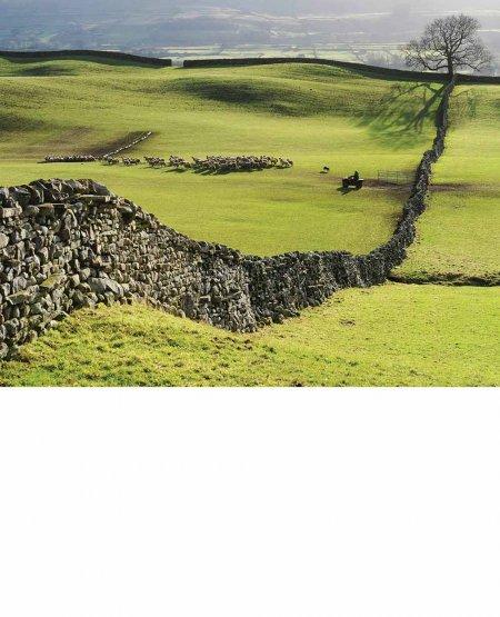Sheep farming, Wensleydale