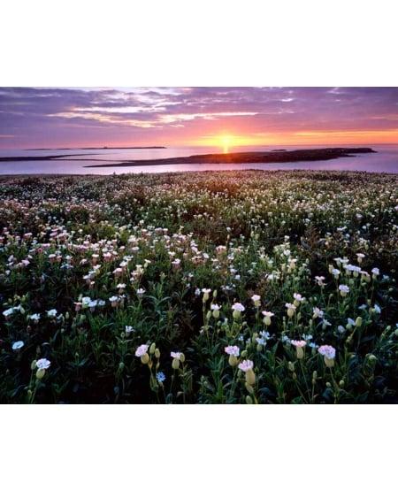 Sunrise over Farne Islands, Northumberland