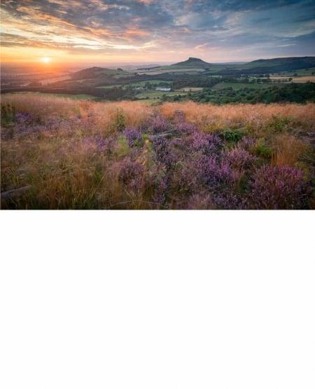 Return of the native - regenerating heather, sunset, Roseberry Topping