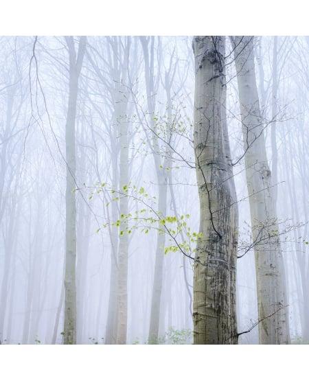 Spring beech, Marton Woods by Lizzie Shepherd