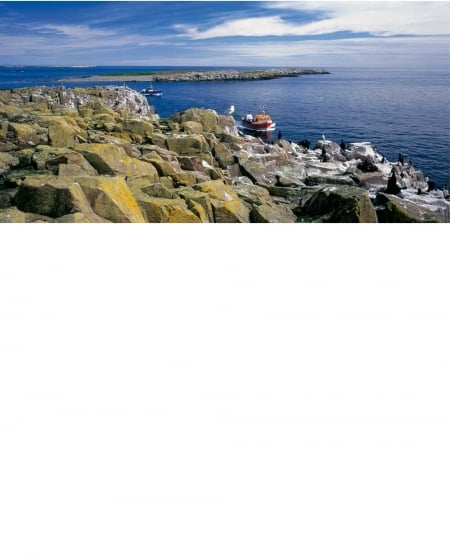 Farne Islands - Greetings Card