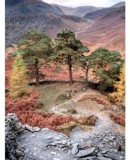 Winding path by Matt Lethbridge