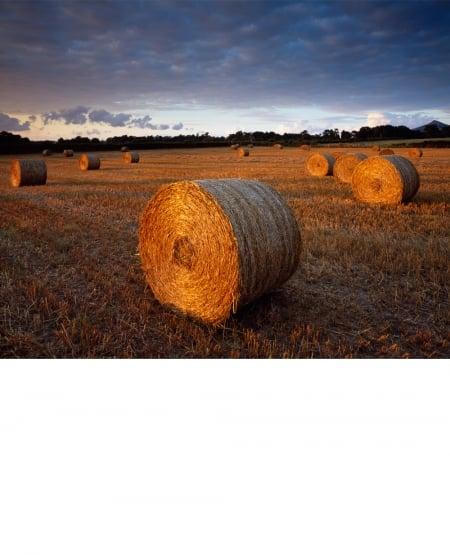 Straw bales, evening light