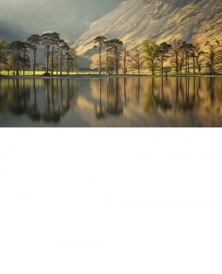 Trees on Lake Buttermere