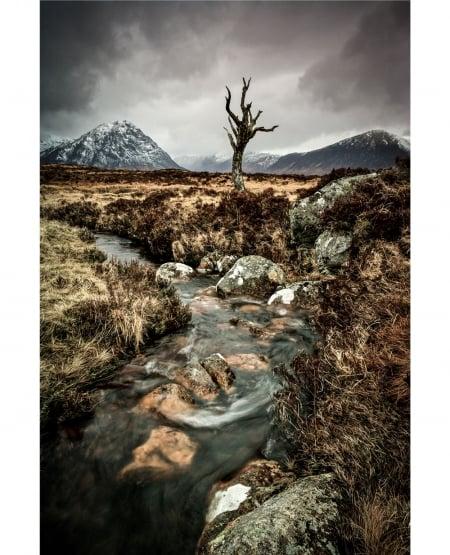 The dead tree of Rannoch Moor - Scottish Highlands