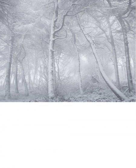Newton Wood, Winter