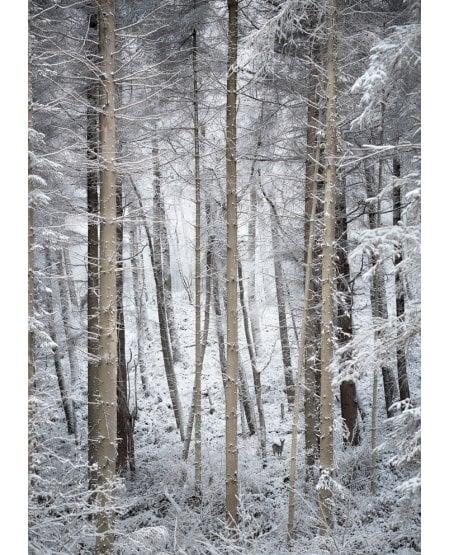 Gribdale Woods, winter