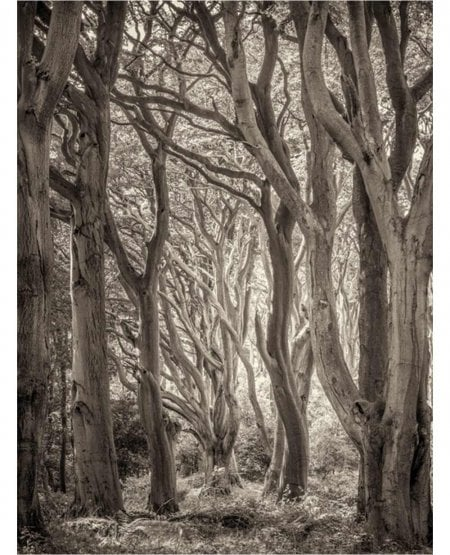 The old forest, Alnwick