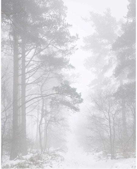 Fog, Gribdale Woods, winter