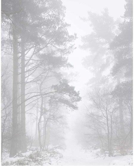 Fog, Gribdale Woods, winter