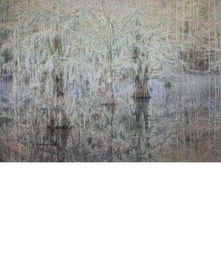 Misty morning, Cypress trees, Caddo Lake, Texas