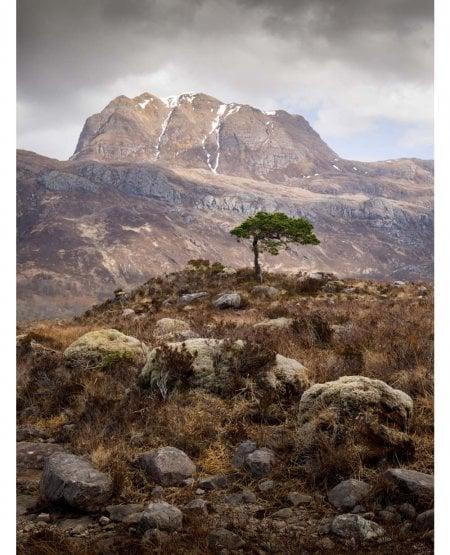 Slioch Pine