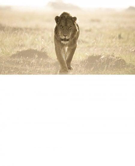 King of the mist, Kenya