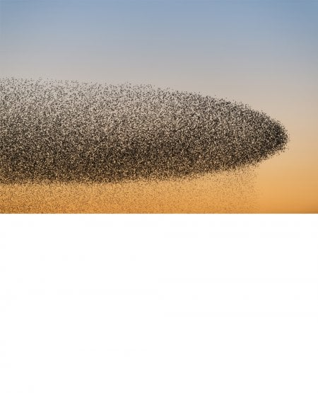 Cloudy with a chance of starlings