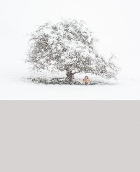 Pale Shelter
