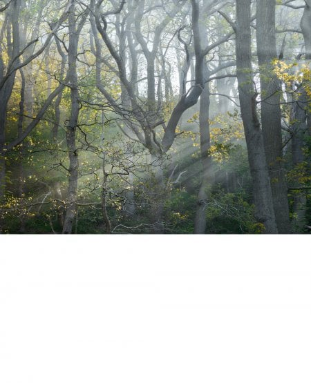 Like the first morning, Newton Wood