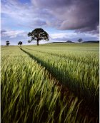 Jack's Field, Easby, North Yorkshire
