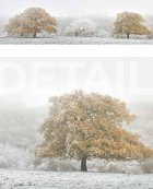 Cranborne Chase, winter  Wiltshire