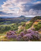 Billowing heather, Roseberry Topping  North York Moors