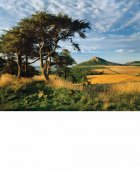 Roseberry Topping in Summer