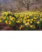 Spring comes to Farndale