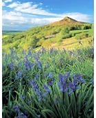 Bluebells, Roseberry Topping