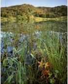 Autumn colours, Loughrigg Tarn