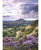 Billowing Heather, Roseberry Topping