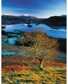 Mountain Ash, Catbells - Greetings Card