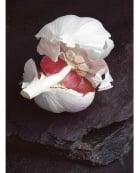 Gossamer skinned Garlic clove on wet Cumberland slate