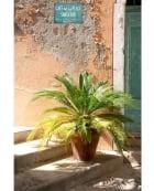 Café de La Place and Palm Fern