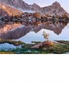 Young Pine, Upper Young Lake, Yosemite