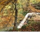 Falling Foss, autumn