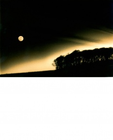 Moonrise over a solitary copse