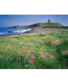 Spring, Lilburn Tower, Dunstanburgh