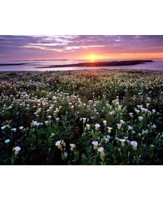 Sunrise over Farne Islands, Northumberland