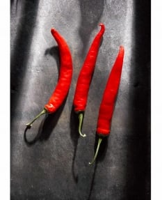 Red Chilis on Cumberland Slate