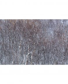 Winter birch, Myvatn Leeming & Paterson