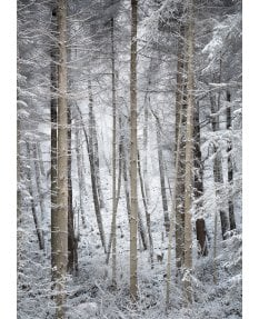 Gribdale Woods, winter