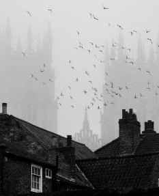 York Minster with birds and mist