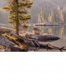 Morning backlight, Alpine Lake, Yosemite