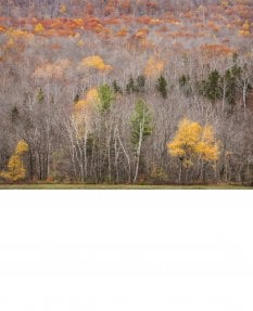 Hillside, late autumn, Grafton Notch, Maine