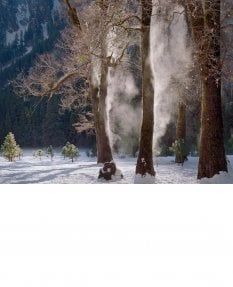 Mist steaming from oaks, winter, Yosemite